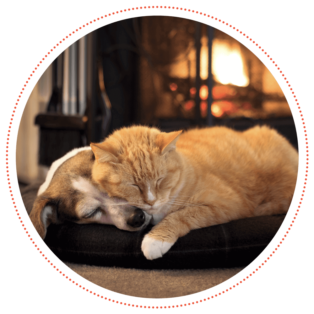 A cat and dog sleeping in front of a fireplace