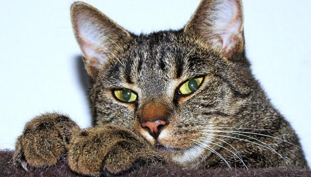 Cats' Low-Stress Vet Visits Begin at Home