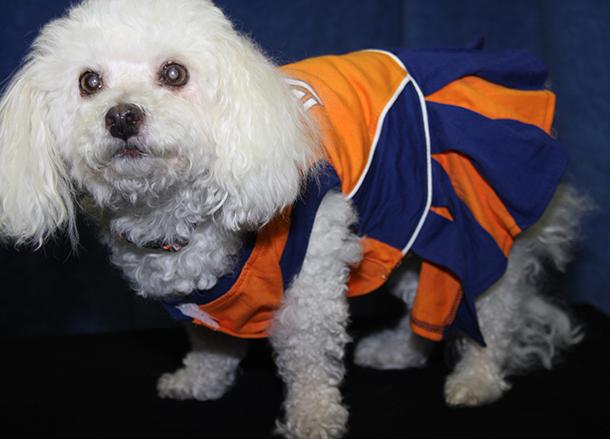 Illini cheer dog