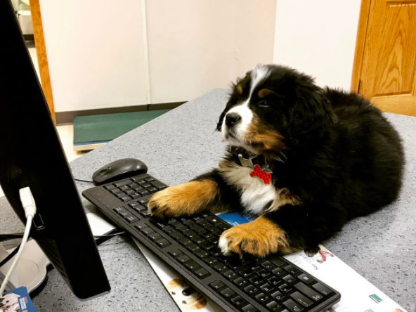 puppy at desk
