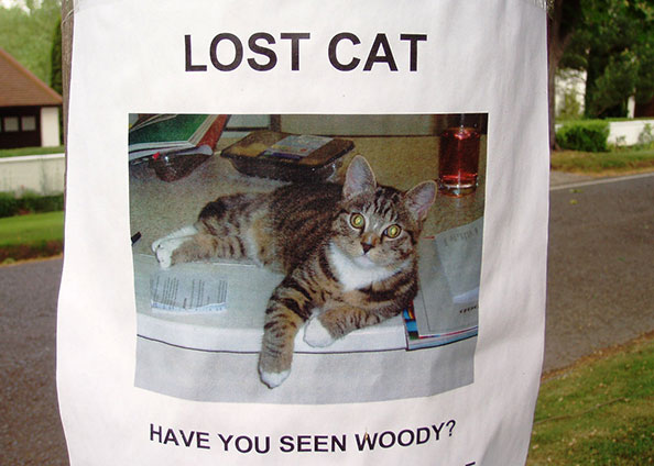 [lost pet flier]