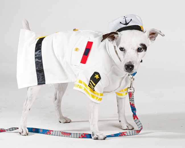 [dog dressed as Coast Guard officer]
