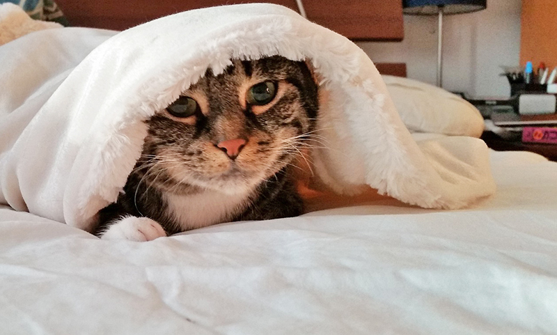 [cat peeking from under covers]