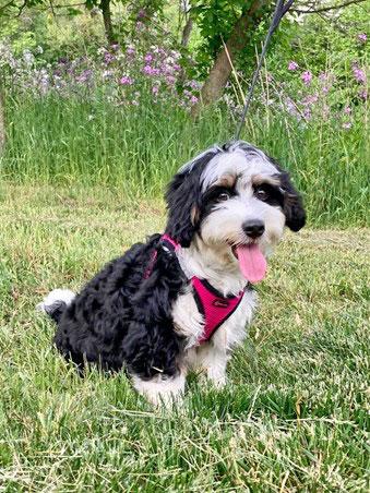 [Dr. Sullivan's puppy, Winnie]